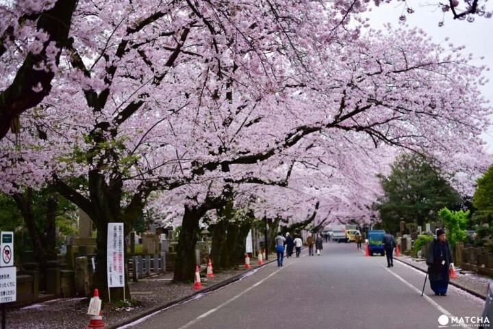 Tokyo's Yanesen Area