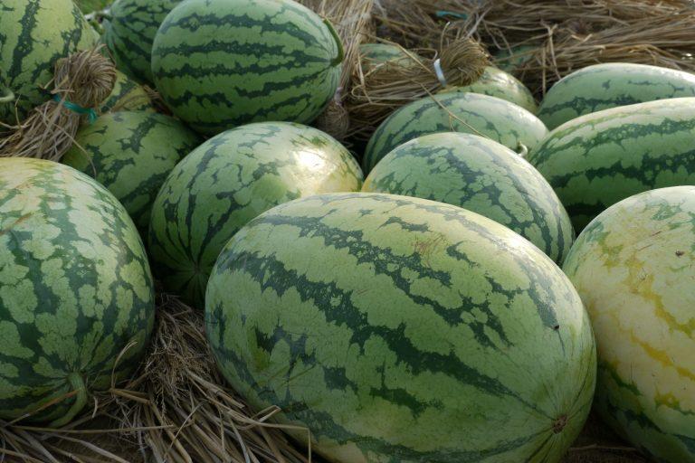 入善巨型西瓜